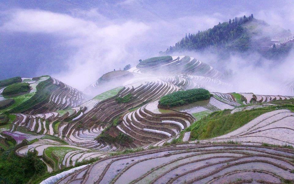 שדה אורז בסין