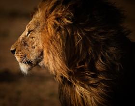 """""""הפחד הגדול ביותר בעולם הוא הפחד מהדעות של אחרים וברגע שאתה מפסיק לפחד מהעדר, אתה כבר לא כבשה, אתה הופך להיות אריה. שאגה אדירה מתעוררת בלבך, שאגה של חופש."""""""