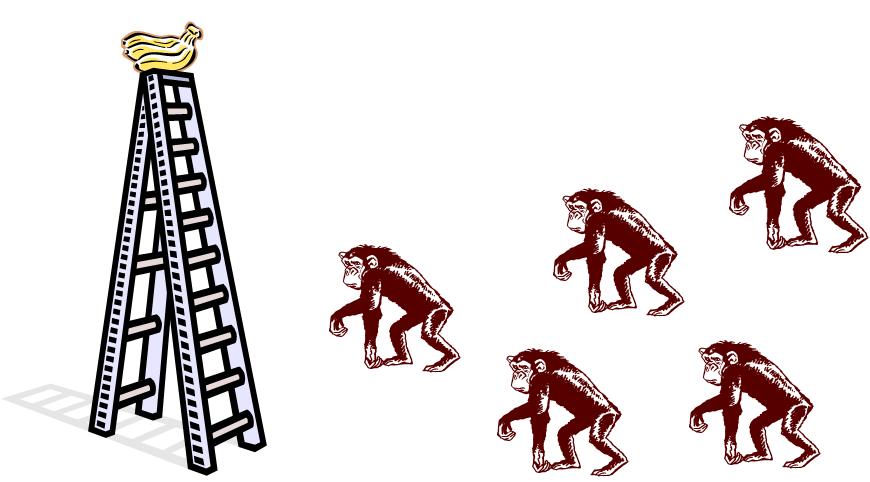 הניסוי – 5 קופים וסולם